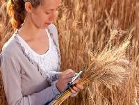В агросекторі не вистачає кваліфікованих працівників