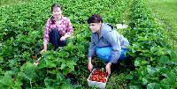 Українцям в Польщі тепер доведеться отримувати дозвіл на сезонну роботу